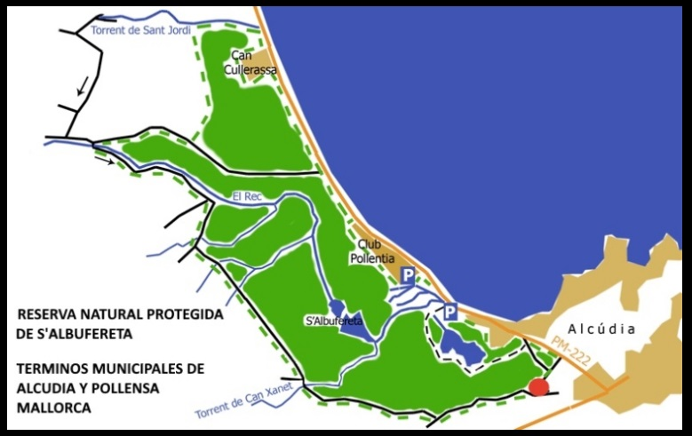 Nuestra escuela de kitesurf ofrece clases de kite en las áreas autorizadas del Parque Natural S'Albufereta.