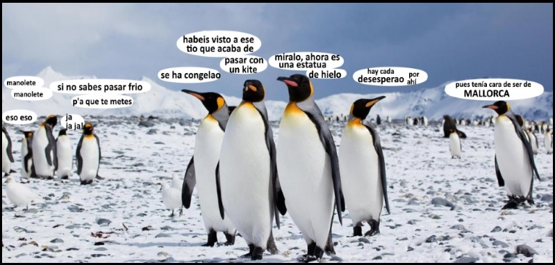entre pinguinos y hablando de kitesurf en Mallorca cuando hace frio