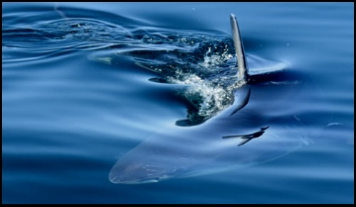 fin kite blog kite course en Juillet l'ecole de kite a Majorque sans requin aucune