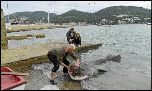 hace unos dias, encontraron un tiburón flotando sin vida