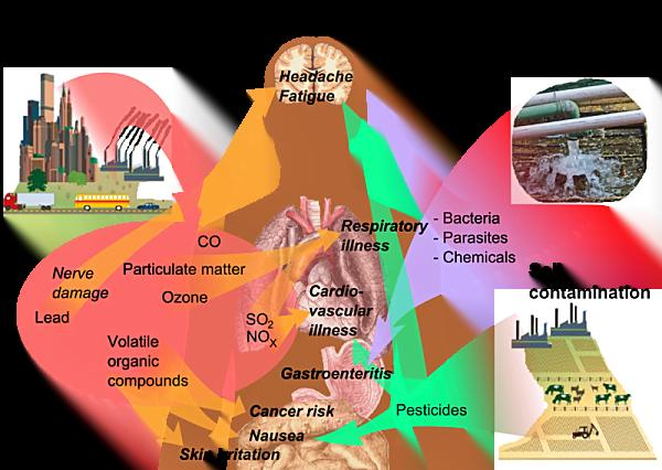 3 como afecta nuestro cuerpo la polucion
