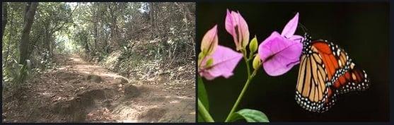 21 trilhas e borboletas